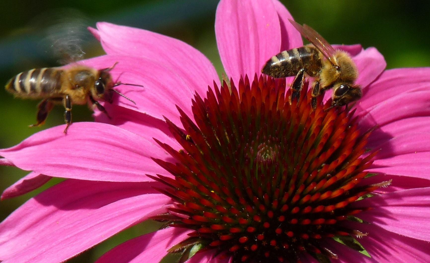 rettet die bienen baden württemberg
